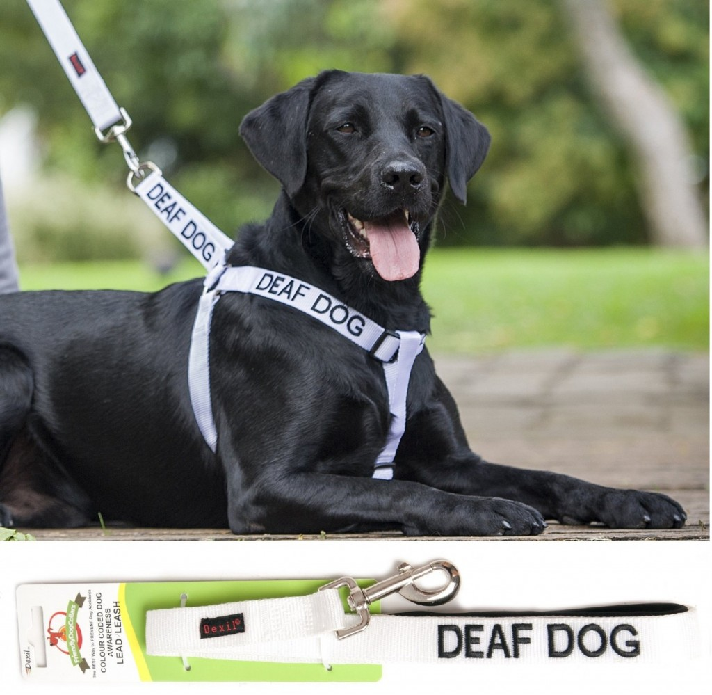 5 Facts About Deaf Dogs for Deaf Dog Awareness Week